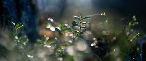 Preview wallpaper plant, leaves, blur, green, macro
