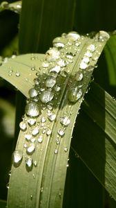 Preview wallpaper plant, leaves, drops, green, macro