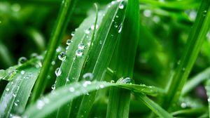 Preview wallpaper plant, leaves, drops, wet, green, macro