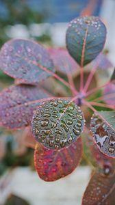 Preview wallpaper plant, leaves, drops, macro, wet
