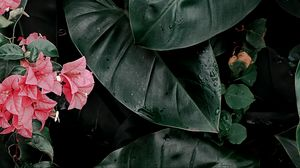 Preview wallpaper plant, leaves, flowers, inflorescences, exotic, green, glossy