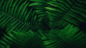 Preview wallpaper plant, leaves, green