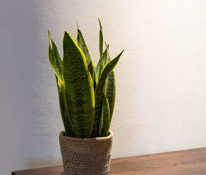 Preview wallpaper plant, leaves, pot, decor