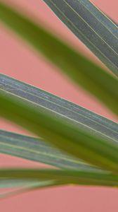 Preview wallpaper plant, leaves, veins, macro