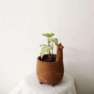 Preview wallpaper plant, pot, decor, minimalism