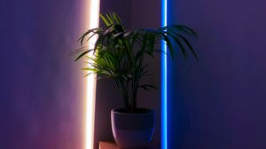 Preview wallpaper plant, pot, neon, backlight, decorative