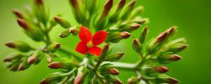 Preview wallpaper plants, stem, flower