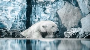 Preview wallpaper polar bear, bear, water