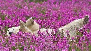 Preview wallpaper polar bear, flowers, lie down, baby
