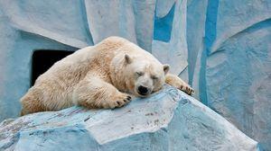 Preview wallpaper polar bear, ice, rest