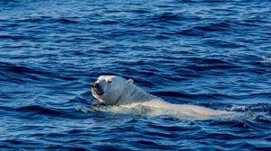 Preview wallpaper polar bear, sea, swim, bear