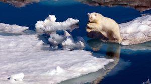 Preview wallpaper polar bear, snow, jump, water, ice