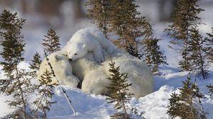 Preview wallpaper polar bears, family, snow, grass, care