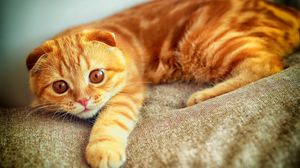 Preview wallpaper portrait, plays, paw, red, cat