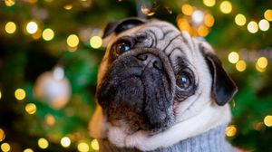 Preview wallpaper pug, dog, cute, tree, new year