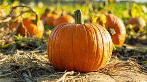 Preview wallpaper pumpkin, vegetable, autumn, harvest
