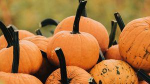 Preview wallpaper pumpkin, vegetable, autumn, harvest, grass