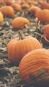 Preview wallpaper pumpkin, vegetables, orange, autumn