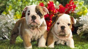 Preview wallpaper puppies, english bulldog, kids, couple