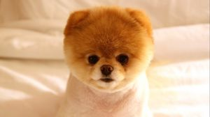 Preview wallpaper puppy, cute, face, eyes, doggy