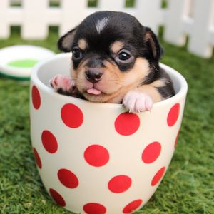 Preview wallpaper puppy, dog, cup