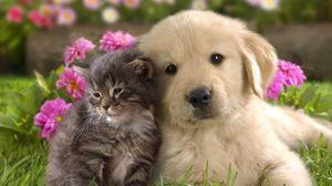 Preview wallpaper puppy, kitten, grass, flowers, couple, friendship