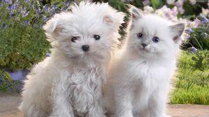 Preview wallpaper puppy, kitten, pair, friendship
