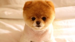 Preview wallpaper puppy, muzzle, cute, fluffy