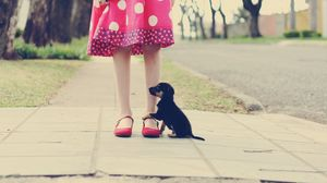 Preview wallpaper puppy, road, foot, loyalty