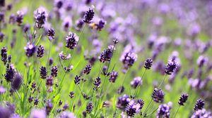 Preview wallpaper purple, flowers, lavender
