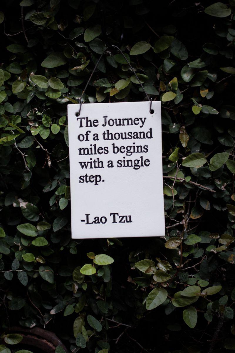 800x1200 Wallpaper quote, phrase, words, inscription, signboard, bush, leaves
