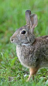 Preview wallpaper rabbit, animal, cute, grass