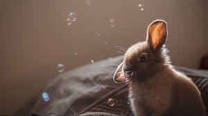 Preview wallpaper rabbit, ears, bubbles