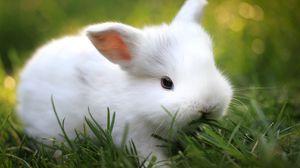Preview wallpaper rabbit, grass, food, cute