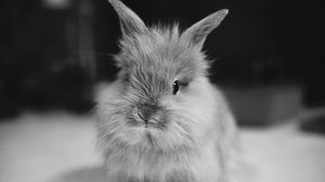 Preview wallpaper rabbit, small, furry, black white