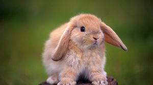 Preview wallpaper rabbit, tree stump, ears, beautiful