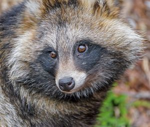 Preview wallpaper raccoon, animal, glance, cute, wildlife