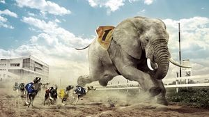 Preview wallpaper race, competition, dog, elephant, sand lane, sky, cloud, fangs, house, building, glass, lamps, grass, fence