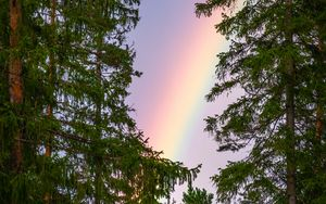 Preview wallpaper rainbow, trees, branches, sky, natural phenomenon, after the rain