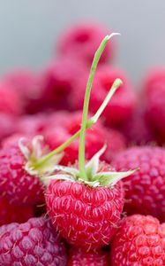 Preview wallpaper raspberry, berries, ripe, juicy, close-up