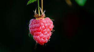 Preview wallpaper raspberry, berry, macro