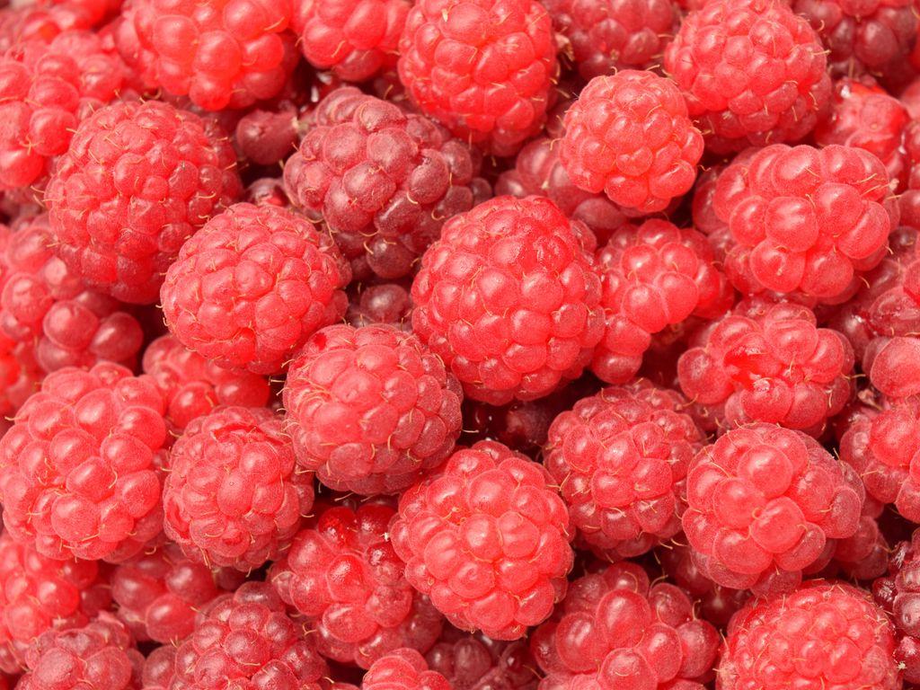 1024x768 Wallpaper raspberry, berry, ripe, many