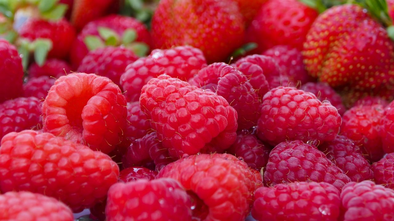 1280x720 Wallpaper raspberry, berry, ripe, plenty