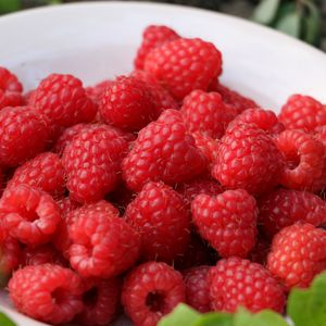 Preview wallpaper raspberry, berry, ripe, saucer, harvest