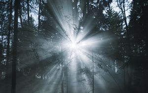 Preview wallpaper rays, forest, trees, glow, fog