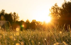 Preview wallpaper rays, grass, field, glare