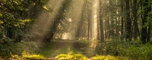 Preview wallpaper rays, path, forest, branches, trees
