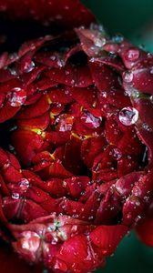 Preview wallpaper red, flower, drops, close-up