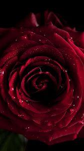 Preview wallpaper red, flowers, macro, rose