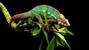 Preview wallpaper reptile, chameleon, twigs
